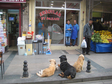 Dogs wait patiently outside a butcher's shop