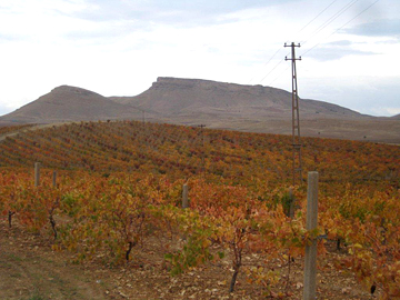 The Sukru Baran vineyard