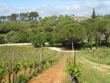 Old Cabernet Sauvignon vines at Mas de Daumas Gassac