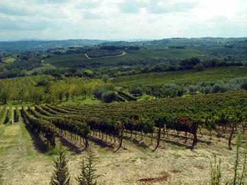 Frescobaldi's Castiglioni vineyard
