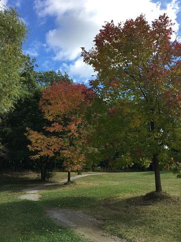 a path through trees in a park